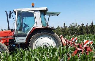 Maisspecialist%3A+%27Je+ziet+de+mais+gewoon+groeien%27