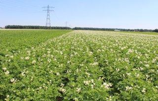 Areaal+akkerbouw+krimpt+met+1%2E600+hectare