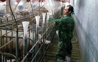Chinese+WH+Group+draait+minder+omzet+in+varkensvleesdivisie