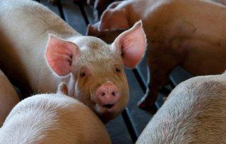 Sensoren+in+meterkast+moeten+brand+in+varkensstal+voorkomen