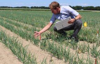 BASF test nieuw onkruidschema in uien