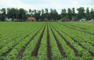 Campagneprijs+Avebe+76%2C50+euro+per+ton+aardappelen