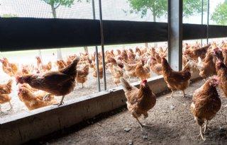 Europese+waakhond+waarschuwt+voor+vogelgriep