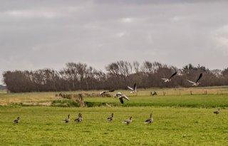 Landbouw+boos+over+draai+Noord%2DHolland+faunaschade