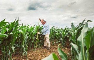 Eerste+pluimen+in+mais+laten+zich+zien%2C+groei+remt+af