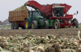 Europees aanbod legt druk op uienmarkt