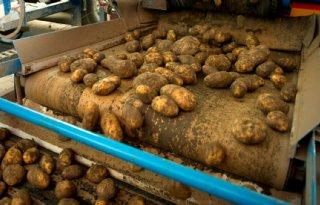 Aardappelverwerking+in+september+10+procent+lager