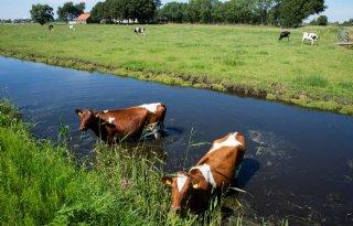 Nitraatplan zet grondgebondenheid onder druk