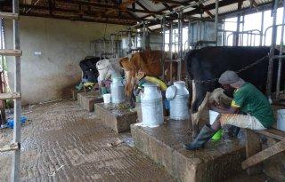 Melkveehouder+Holtrop%3A+%27Sluit+aan+bij+de+gebruiken+van+Tanzania%27