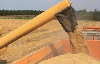 CZAV+ziet+flinke+verschillen+bij+oogst+wintergerst