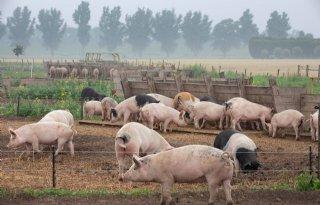 Prijsverschil+biologisch+varkensvlees+het+grootst