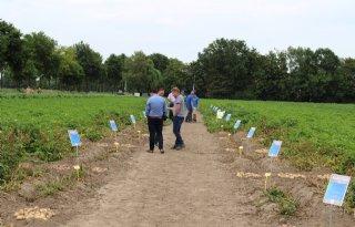 Schaap Holland showt eigen aardappelrassen