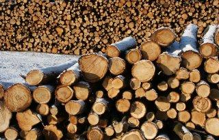 Meer houtkap in Duitsland door droogteschade