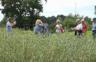 Naakte haver krijgt kans in Drenthe