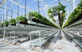 Nevelinstallatie+zorgt+voor+beter+klimaat+aardbeien