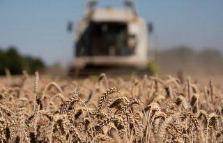 Roemeense graanproductie sinds 2007 verviervoudigd
