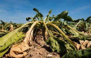 Drie+keer+zoveel+oogstverlies+door+droogte+en+hitte+in+Europa