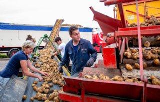 Kwaliteitsbeoordeling voor aardappelen onder kostprijs