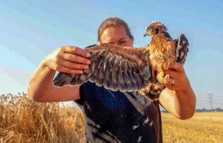 ANLb maakt het verschil voor akkervogels in Flevoland