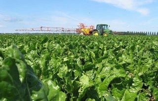 KWS-adviseur: 'Conviso One voor bietenteler interessante herbicide'