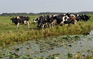 Zuid%2DHolland+mag+boeren+onteigenen+voor+natuurdoelen