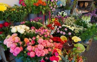 Aantal duurzame bloemisten stijgt naar 250
