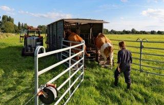 Ellen+de+Lange+melkt+zes+koeien+aan+de+rand+van+Zwolle