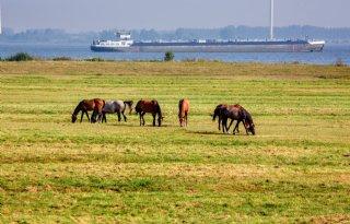 Rijkswaterstaat+rekent+op+hoogwater+bij+Rijn+en+Maas