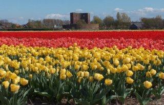 Noordwijk+respecteert+afspraken+over+bollenareaal