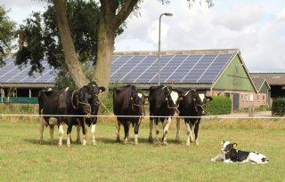 Jan+Vonk+uit+Goudriaan+trots+op+zes+generaties+koeien