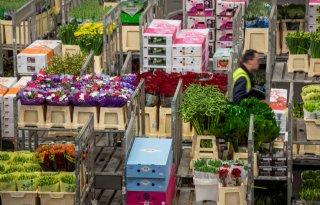 Klokvoorverkoop+FloraHolland+stijgt+31+procent