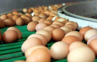 Prijzen+op+eiermarkt+in+opwaartse+beweging