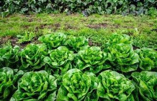 Nagenoeg geen residu in Europese voedingsmiddelen