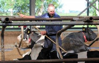 Verhuizing+biedt+melkveehouders+nieuwe+kansen