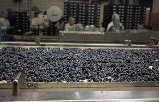 Blauwe+bes+scoort+bij+consument+en+handel