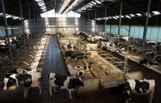 Flynth: 'Te weinig financiële ruimte veehouder voor stikstofmaatregelen'