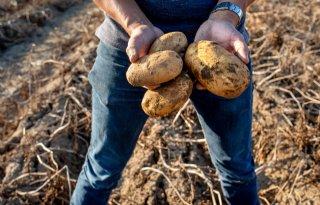 Corona toont kwetsbaarheid aardappelketen