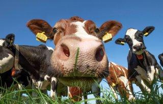 Biologische+melkprijs+FrieslandCampina+laagste+in+vijf+jaar