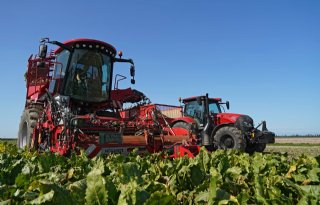 Dunne+stand+is+uitdaging+bij+oogst+suikerbieten