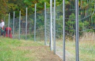 Vast wildezwijnenhek op grens tussen Duitsland en Polen gereed