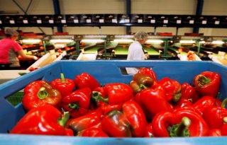 Productiewaarde+groente%2D+en+fruitsector+stijgt+naar+3%2C9+miljard+euro