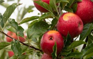 Automatische spuitregistratie in boomfruitteelt