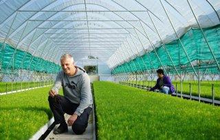 Tenax is gespecialiseerd in boomzaden en plugplanten