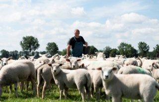 Bedrijf+van+Janssen+is+financieel+gezond+met+drie+takken