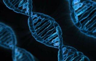 Nobelprijs+voor+ontwikkelaars+DNA%2Dschaar+Crispr%2DCas