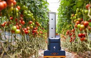 Oogstprognoserobot voor tomaten rijp voor praktijk