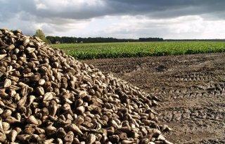 Suikervoorraad in EU fors lager