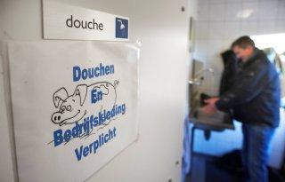 POV lanceert prijs voor schoonste douche op varkensbedrijf