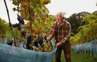 Wijngaard+van+82%2Djarige+Achterhoeker+is+beschermd