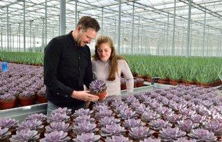 Succulentenkwekerij+in+Bleiswijk+streeft+naar+biologische+teelt